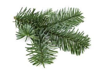Tannenbaum Kaufen Dortmund.Hennecke Forstprodukte Schöne Weihnachtsbäume Und Frisches